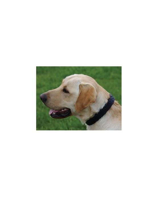 Collar Triple Crown de pinchos sinteticos perros