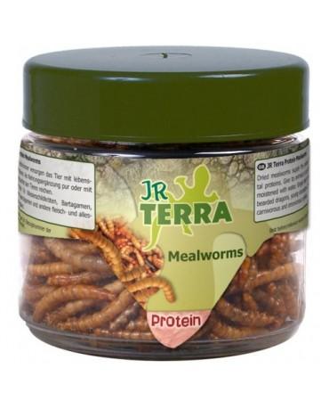 comida-proteinas-gusanos-reptiles-jr-terra-MYAR002