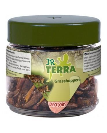 comida-proteinas-saltamontes-reptiles-jr-terra-MYAR001